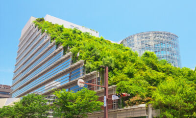 learn about green roofs