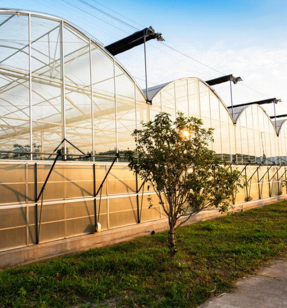 building a greenhouse DIY